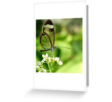 Glasswing Butterfly Visit Greeting Card