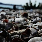 Beach Shells_1 by Kyle LeBlanc