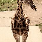 Giraffes are cute by Oceanna Solloway