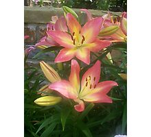 Beautiful lily Photographic Print