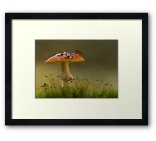 Fly Agaric with Stink Bug Framed Print