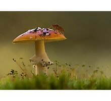 Fly Agaric with Stink Bug Photographic Print