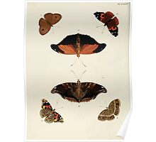 Exotic butterflies of the three parts of the world Pieter Cramer and Caspar Stoll 1782 V1 0360 Poster