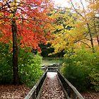 Walkway to Pachaug Pond by Debbie Robbins