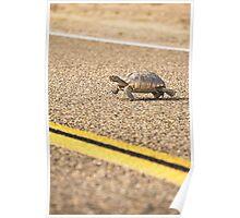 Mojave Desert Tortoise  Poster