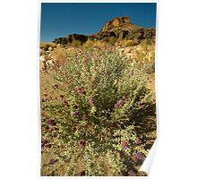 Mojave Desert 1 Poster