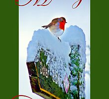 Red Robin Christmas Card by Aj Finan