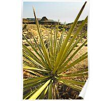 Mojave Desert 4 Poster