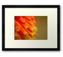 Red Hot Orange  (Macro red hot poker) Framed Print