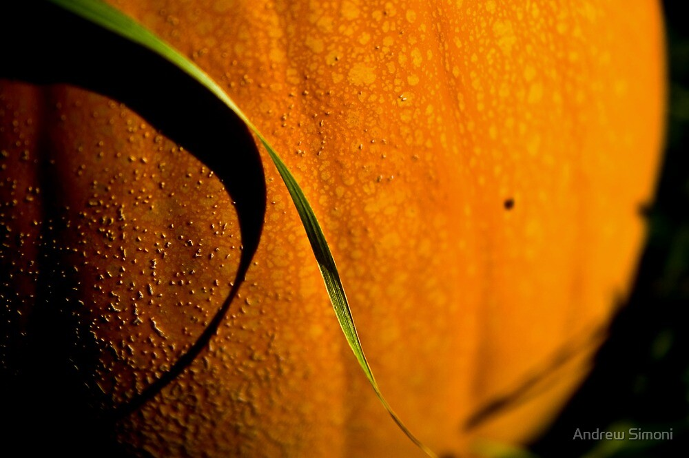 Pumpkin Spice by Andrew Simoni