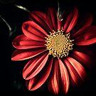 Wayside Flower by Dania Reichmuth