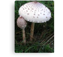 Mushroom child Canvas Print