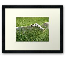 Is this Heaven? Framed Print
