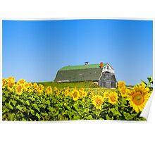 Sunflower A Barn Poster