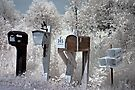 Waiting for the Mailman - Dunrobin Ontario by Debbie Pinard