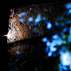 Spiderweb. by emerymills