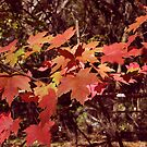 Autumn Leaves by SBrown