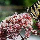 Butterfly. by emerymills