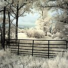 Farm Gate - Dunrobin, Ontario by Debbie Pinard
