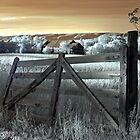 Sunset in Dunrobin, Ontario by Debbie Pinard