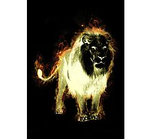 Flaming lion Photographic Print