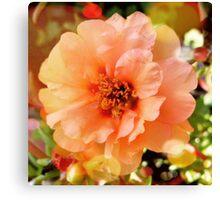 Precious Peach: Blooms in Boothbay Harbor Canvas Print