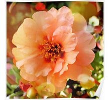 Precious Peach: Blooms in Boothbay Harbor Poster