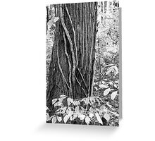 Vines and Bark Greeting Card