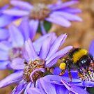Bumble Bee by jasongambone74