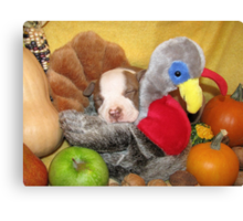 Uno Asleep With The Turkey Canvas Print