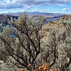 Untamed West (Sagebrush) by rocamiadesign