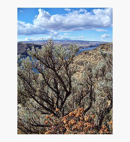 Untamed West (Sagebrush) Photographic Print