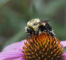 Pretty in Pollen by Holly Schimpf