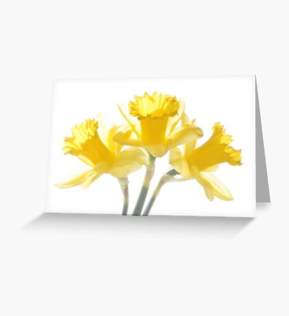 Sunny Daffodils on White Greeting Card