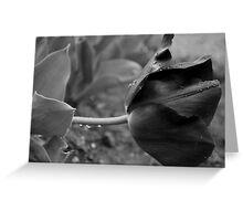 Tulip in B&W Greeting Card
