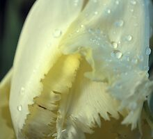 Spring Stirring by Lozzar Flowers & Art