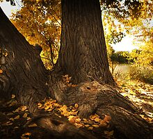 Cottonwood Fall by KatsEyePhoto