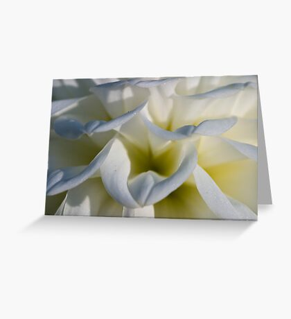 White Flower #1 - Thuya Garden Greeting Card