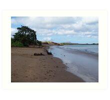 Seals on the Beach - Galapagos Art Print