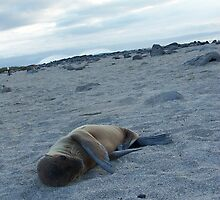 Baby Seal on the Beach - Galapagos by Nina Brandin