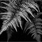 Fern in Black & White by Victoria Jostes
