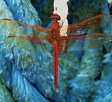 Red Dragon by arawak