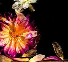 Dying Flower in Water #3 - Thuya Garden by David Clayton