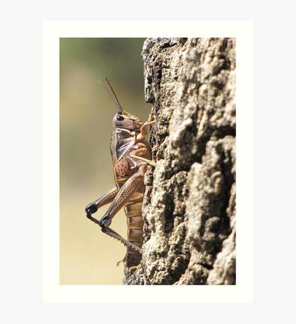 Plains Lubber Grasshopper ~ Female Art Print