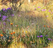 Bush Springtime by Harry Oldmeadow