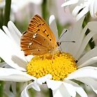 Summer Delight With Butterfly by Rumyana Whitcher