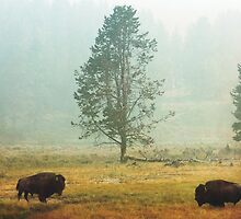 Bison Landscape IV by Miles Glynn
