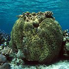 The Old Man of the Reef by Dr Andy Lewis