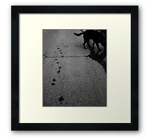 Paw prints, day and night Framed Print
