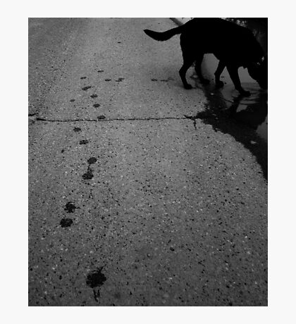 Paw prints, day and night Photographic Print